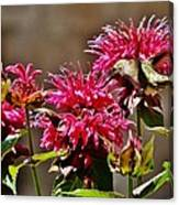 Breakfast At The Bee Balm Canvas Print