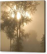 Breaking Through The Fog Canvas Print