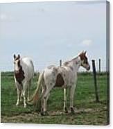 Breed Horses Canvas Print
