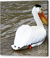 Breeding Plumage Canvas Print