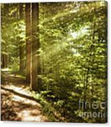 Eternal Woods Canvas Print