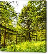 Breezy Spring Afternoon Canvas Print
