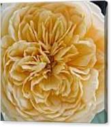 Brenda's Garden I Canvas Print