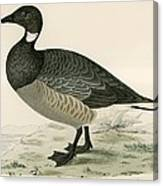 Brent Goose Canvas Print