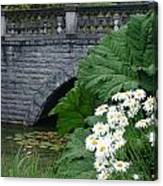 Stone Bridge Daisies Canvas Print