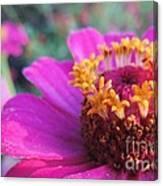 Bridgets Bloom Canvas Print