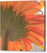 Bright And Sunny Canvas Print