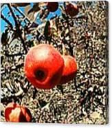 Bright Apples Canvas Print