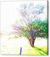 Bright Day Canvas Print