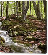 Bright Forest Creek Canvas Print