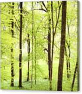 Bright Green Forest In Spring With Beautiful Soft Light  Canvas Print