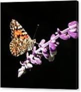 Painted Lady Butterfly On Purple Flower Canvas Print