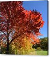 Bright Orange Of Fall Canvas Print