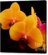 Bright Orchids Canvas Print