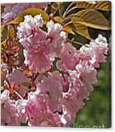 Bright Pink Apple Tree Flowers Canvas Print