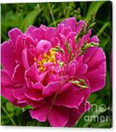 Bright Pink Blossoms Canvas Print