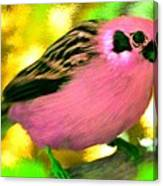 Bright Pink Finch Canvas Print