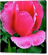 Bright Pink Tulip In Kuekenhof Flower Park-netherlands Canvas Print