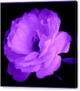 Bright Purple Perfection Canvas Print