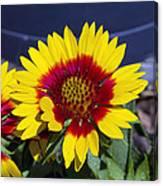 Bright Summer Flower  Canvas Print