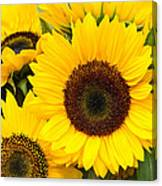 Bright Sunflower Blossoms Canvas Print