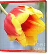 Bright Tulip Canvas Print