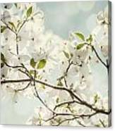 Bright White Dogwood Flowers Against A Pastel Blue Sky With Dreamy Bokeh Canvas Print