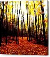 Bright Woods Canvas Print