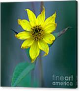 Bright Yellow Wildflower Canvas Print