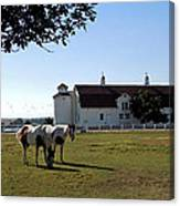 Brighton Barn And Horses Canvas Print
