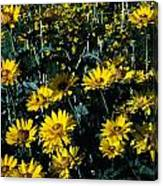 Brillant Flowers Full Of Sunshine. Canvas Print