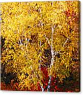 Brilliance Of Autumn On Rib Mountain Canvas Print