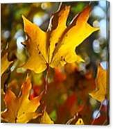 Brilliant Autumn Light And Color Canvas Print