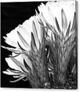 Brilliant Blossoms Diptych Left Canvas Print