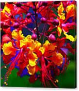 Brilliant Bouquet Canvas Print