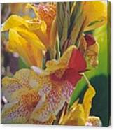 Brilliant Canna Lilies Canvas Print