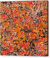 Brilliant Colors Canvas Print