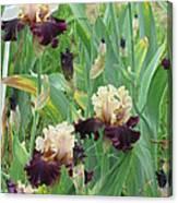 Brilliant Disguise Iris Canvas Print