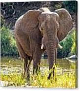 Brilliant Elephant Canvas Print
