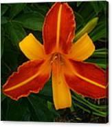 Brilliant Orange Lily Canvas Print