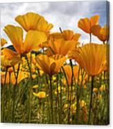 Bring On The Poppies Canvas Print