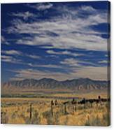 Bringing In The Herd Canvas Print