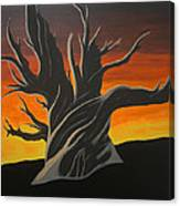 Bristle Cone Pine At Dusk Canvas Print