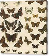 British Butterflies Canvas Print