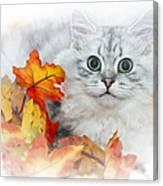 British Longhair Cat Canvas Print