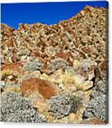 Brittlebush Leaves And Santa Rosa Mountains From Borrego Palm Canyon In Anza-borrego Desert Sp-ca Canvas Print
