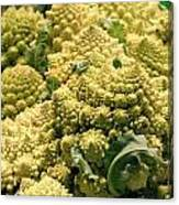 Broccoflower Canvas Print