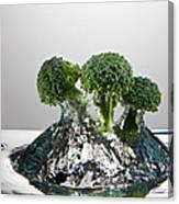 Broccoli Freshsplash Canvas Print