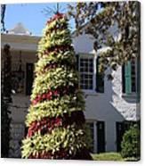 Bromelia Christmas Tree Canvas Print