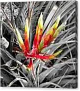 Bromeliad 1 Canvas Print